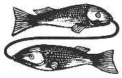 Ribi - horoskop