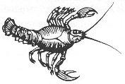 Rak - horoskop