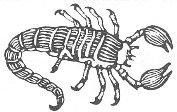 Škorpijon - horoskop